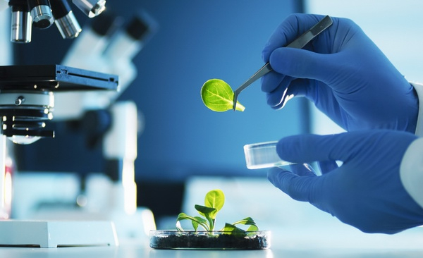 biotechnology dissertation project International journal of thesis projects and dissertation (ijtpd) is open access international journal which publishes articles of undergraduate, postgraduate and doctorate level degree.