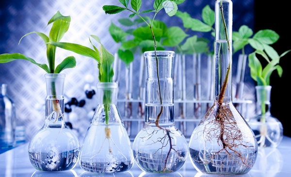 biotechnology a boon Biotechnology will be a boon to indian agriculture this is because the government gives importance to this sector and in order to be globally competitive, the country has toembrace biotechnology for.
